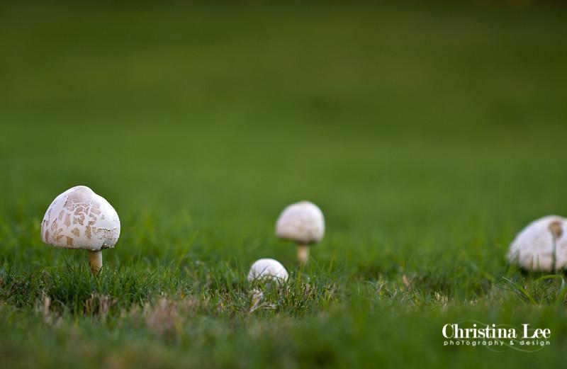 mushroom3web