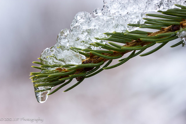 2012_Nov_28_Melting Snow_023