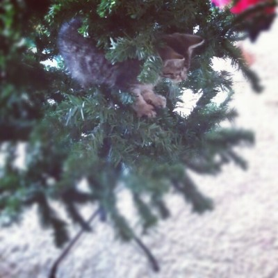 Hmmm this could be fun... It's not even decorated yet & already she can't resist it. Oh Bella, Bella Bella....