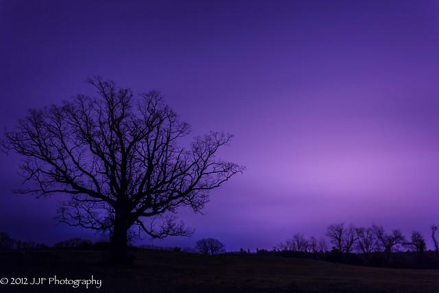 2012_Nov_12_Tree Silhoutte_007