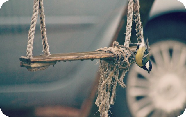 L'oiseau et la balançoire....