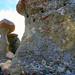 Stone Mushrooms - Babele