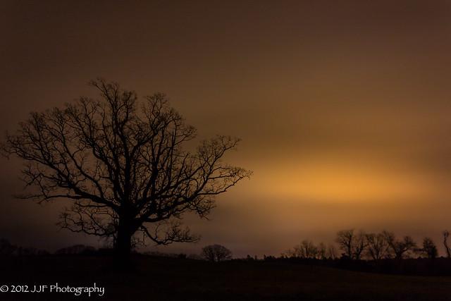 2012_Nov_12_Tree Silhoutte_005