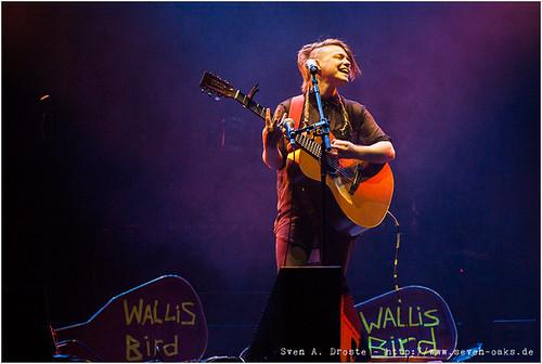 Wallis Bird