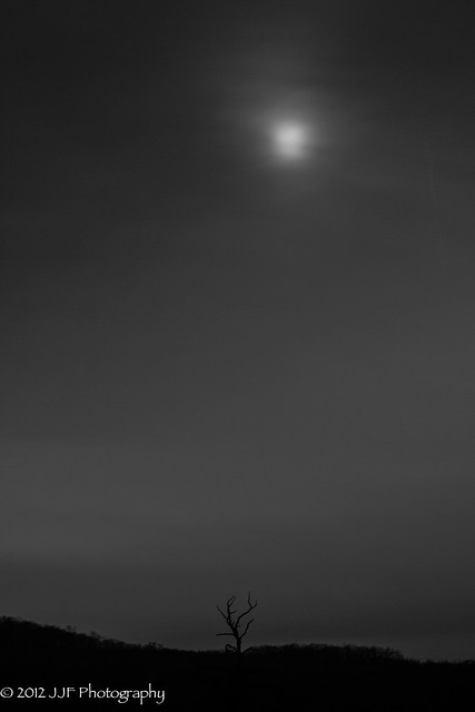 2012_Nov_20_Moon and Tree_006