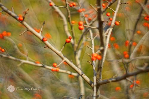 "2.""Favorite Holiday Movie"" December Berries by courtneyec90"