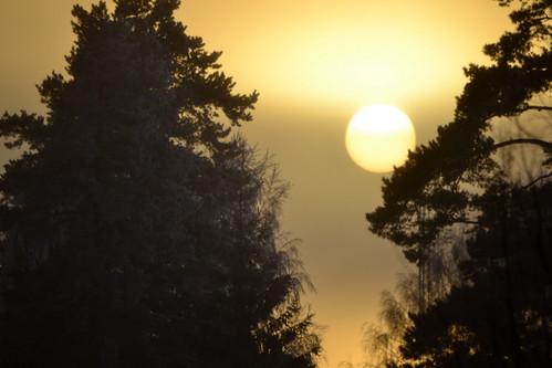 Vintersol / Winter sun