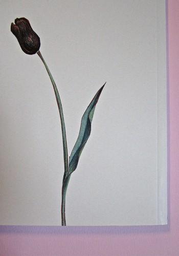 Wolf Erlbruch, L'anatra, la morte e il tulipano. edizioni e/o 2012. Grafica di W. E. e, per l'ed. it.: Emanuele Ragnisco. Quarta di copertina (part.), 1