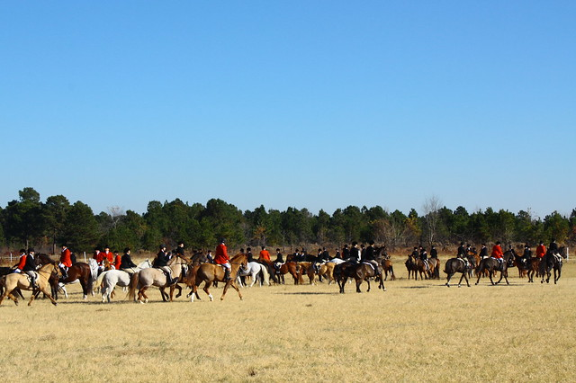 Assembly of horses and riders