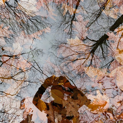 Leaves, reflected trees, and me