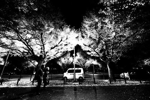 Under the Ginkgo Trees by hidesax