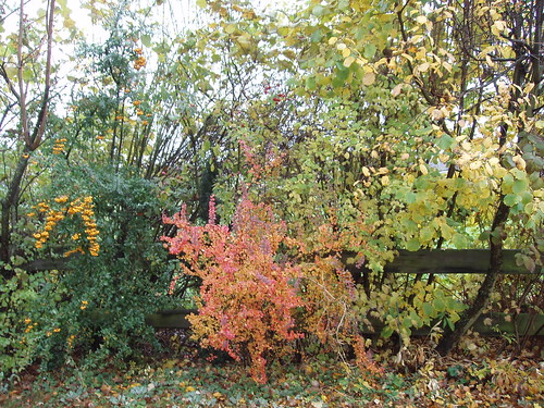 200611170022_n019-autumn-colours