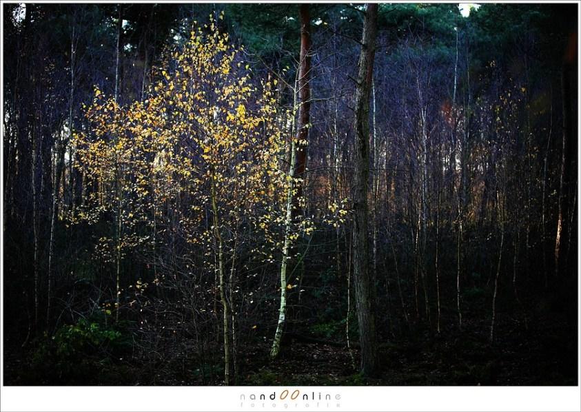 Prachtig licht tijdens herfst in de groote peel
