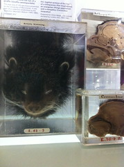 Animals in Jars at The Hunterian Museum