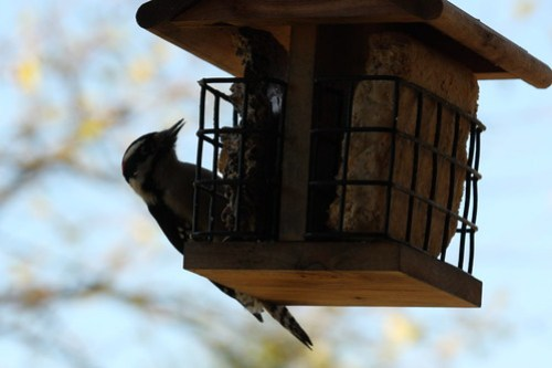 20121106_Birds_022