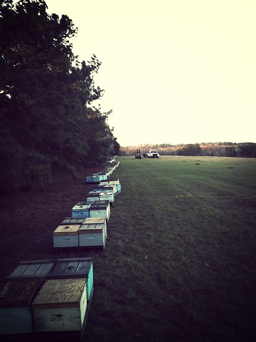 Dec 2012 bee pick up in Jasper, Texas