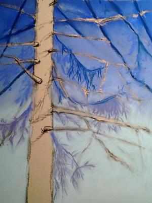20121231_step3_pine