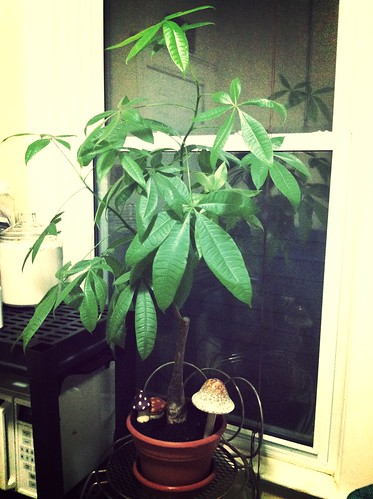 My two year old money tree