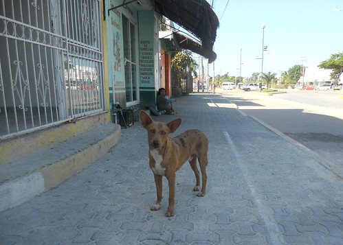 Downtown Tulum Village Dog