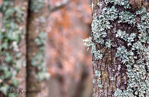 Colori nel bosco