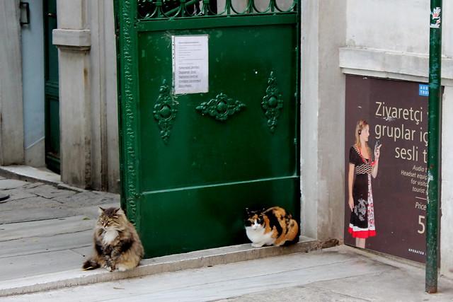 Cats and a green door