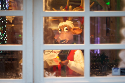 Suspicious reindeer