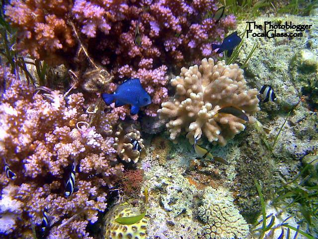 snorkeling cebu