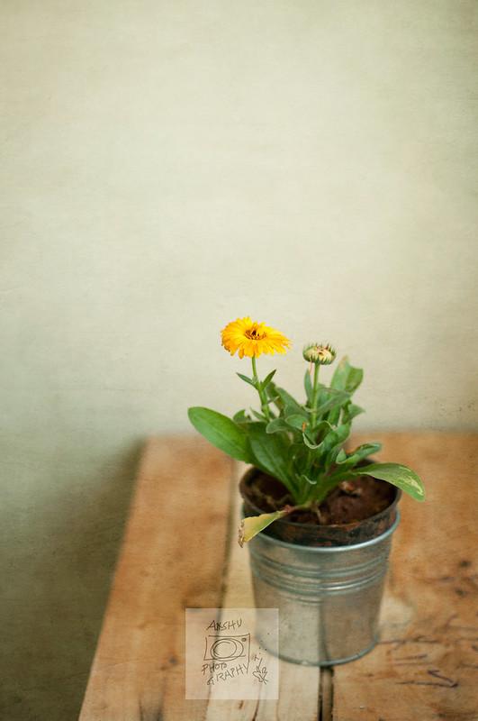 2.365 - Yellow Flower