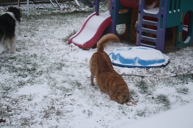 Daphne love snow