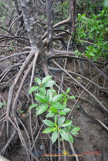 Bakhawan Eco-Park-39.jpg