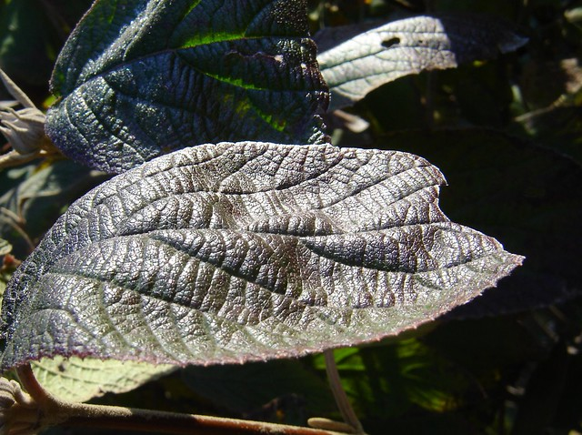 leaf texture in space