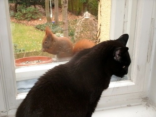 Katze und Eichhörnchen 1
