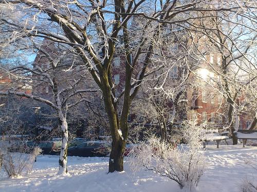 Frost på träd och buskar