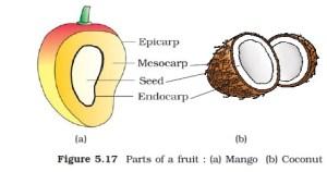 NCERT Class XI Biology: Chapter 5 – Morphology of