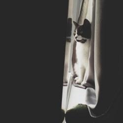 demi-in-window