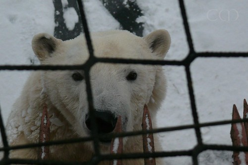 Wow! What a big bear Tonja has become! And look at her expressive face!!!