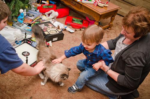 Petting Kitties
