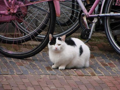 Donkerstraat Kat