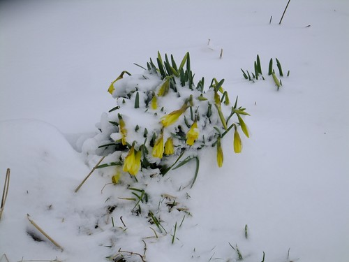 March_snow_8