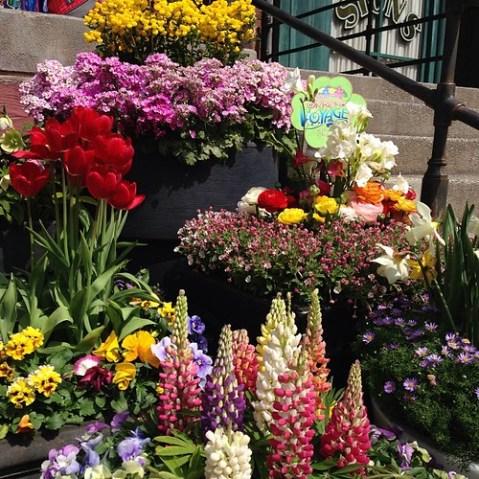 花がいっぱい!いいスペシャルイベントだよね。ショー鑑賞は絶望的だけど。