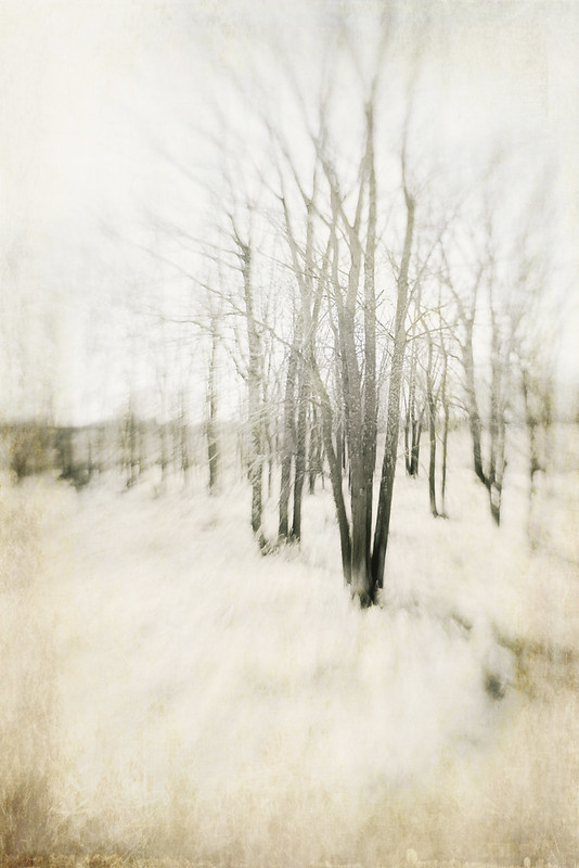 Winter White Trees Trina Baker Photography