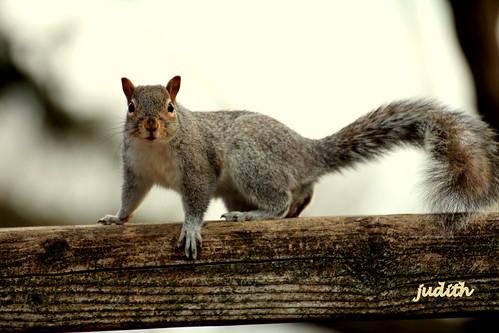 """Got Nuts?"" (EXPLORED)"