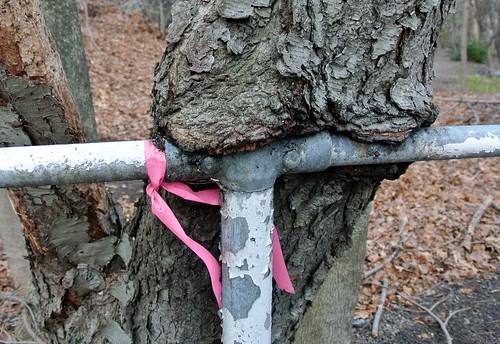 Pink ribbon - Jan 15 / Day 15