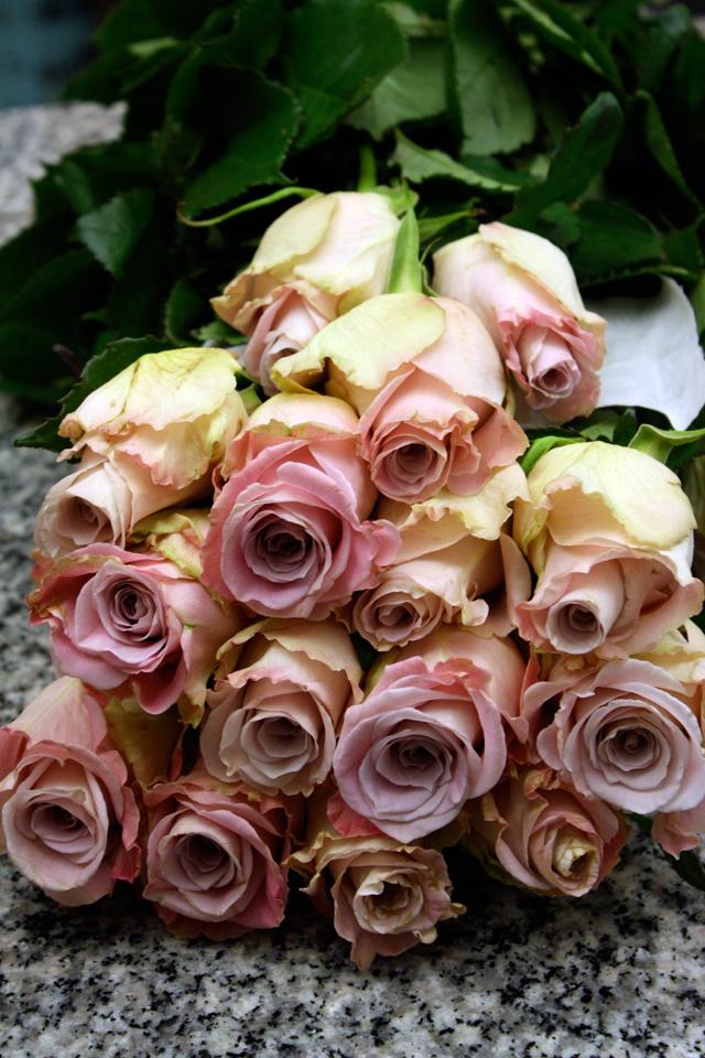 Faith Roses