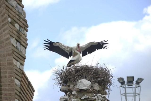 塞爾丘克 (Selçuk) 是離艾菲索斯 (Ephesus) 遺跡最近的城市,此地多處斷垣殘壁頂端都有送子鳥(鸛鳥)所搭的巢,每個巢會有一對送子鳥,牠們會在空中翱翔一陣,然後又返回巢裡站立,不時還會用鳥喙快速的敲擊,發出「扣扣扣扣」的聲音,也算此一城市的特殊景觀。