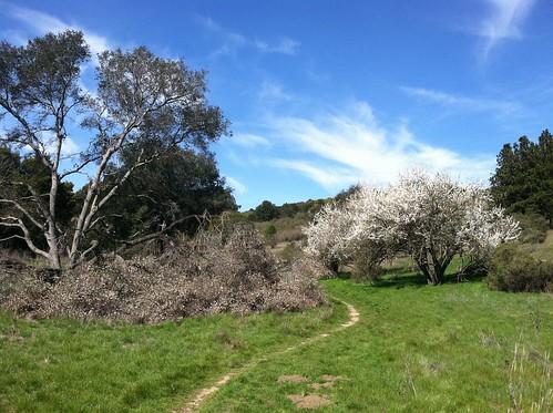 Grass Valley trail plum approach