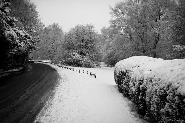 Snow Dayzzz