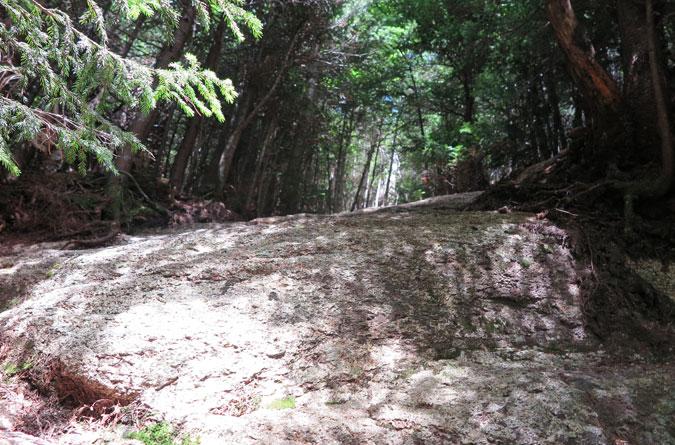 Walden Trail Scramble