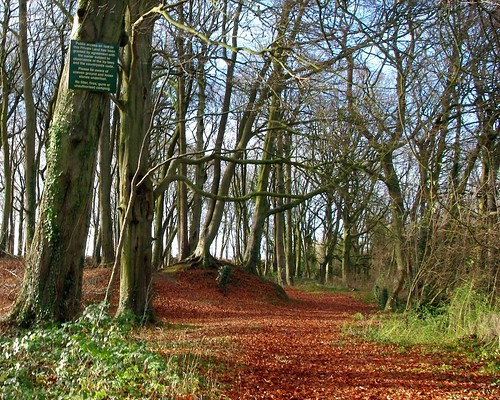 20121202-22_Winertime Woods nr Longborough - Cotswols by gary.hadden