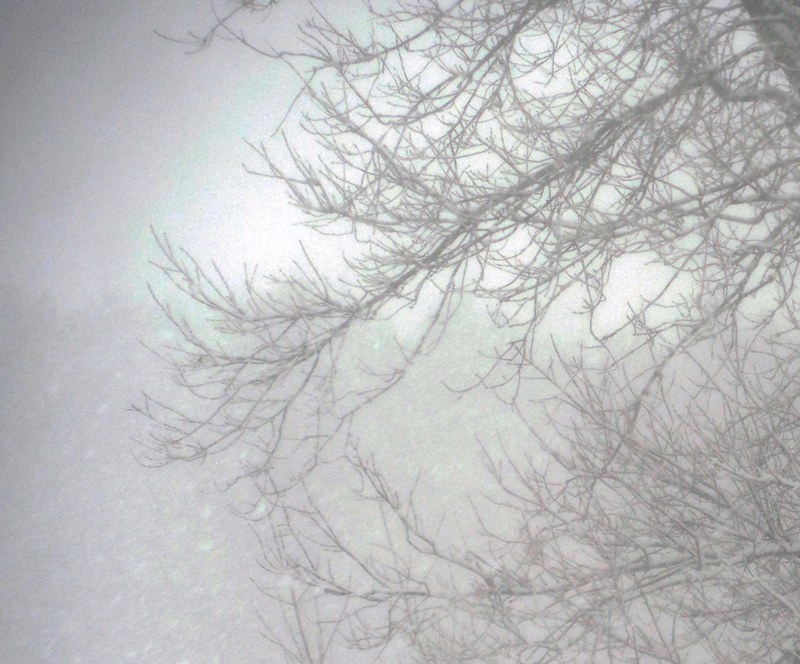 winter branches in snow storm